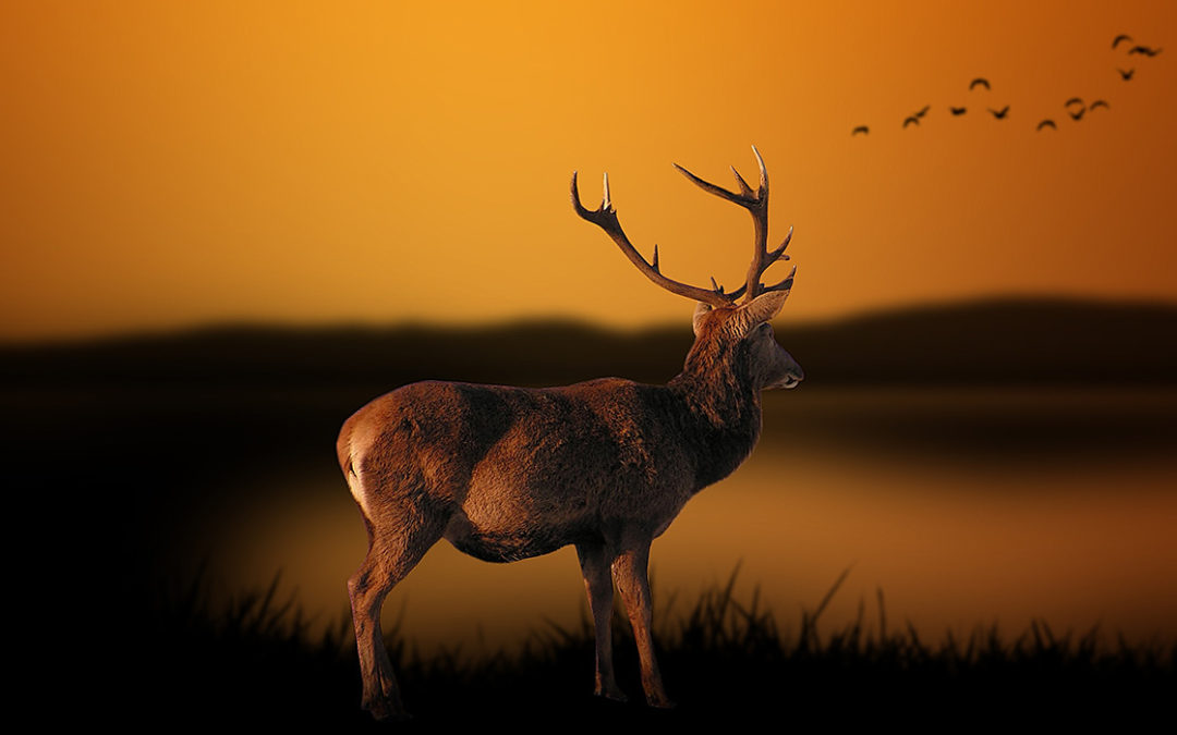Soirée chasse